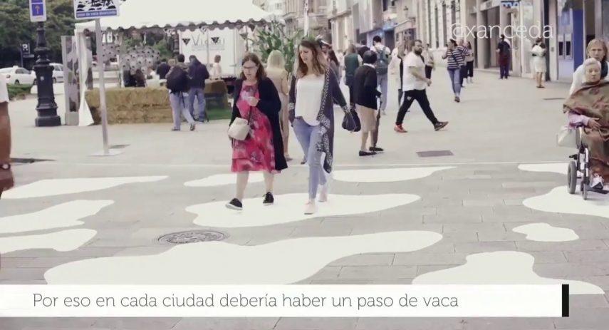 Un paso de vaca en cada ciudad de Galicia